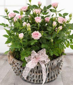 rosebasket1